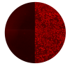 COV-2 Icon